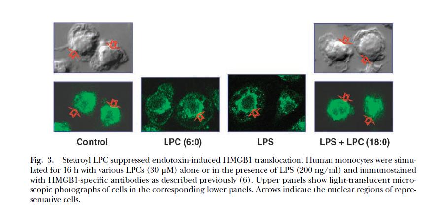 肉豆蔻酰溶血卵磷脂 M-LysoPC|CAS 20559-16-4
